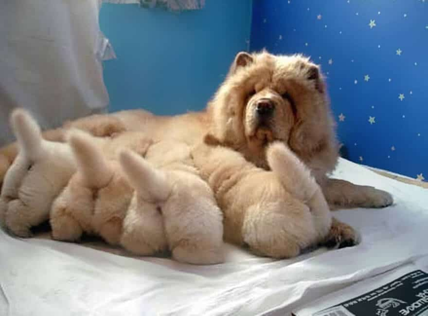 dogs-with-their-babies-113__700 (1)