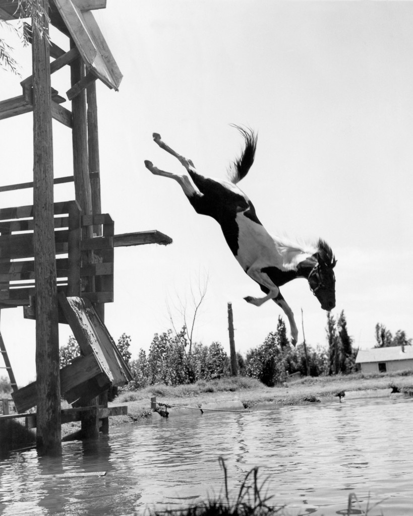 One of the four horse diving team that a fourteen year old rancher's daughter has created on her father's ranch, Plainview, Texas, circa1943. (Photo by Underwood Archives/Getty Images)