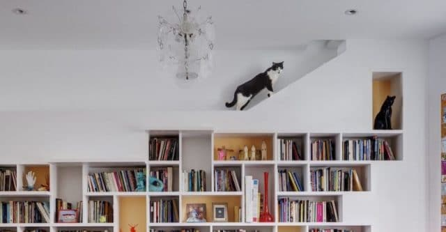 House-for-Booklovers-and-Cats-by-BFDO-Architects-4-1020x530